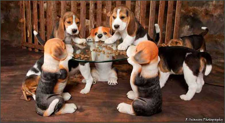 Puppies at dog table